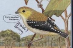 Forty Spotted Pardalote Birds of Australia, Ken Simpson, Nicolas Day